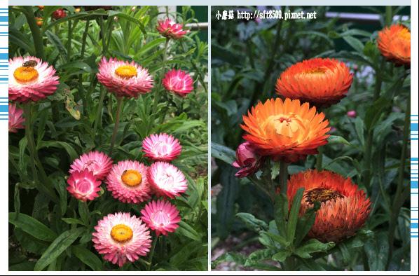 107.6.24.(167)武陵農場-行政中心別館花園.JPG
