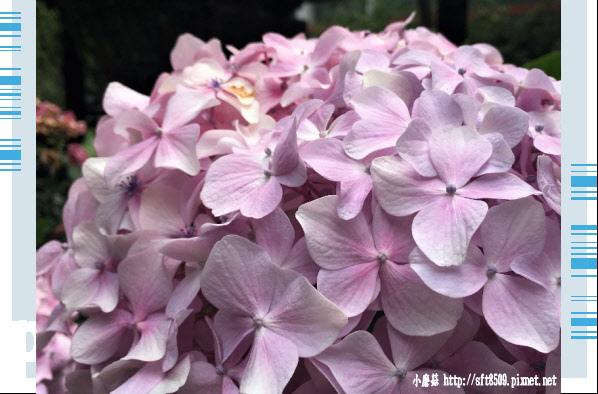 107.6.24.(182)武陵農場-武陵賓館.JPG