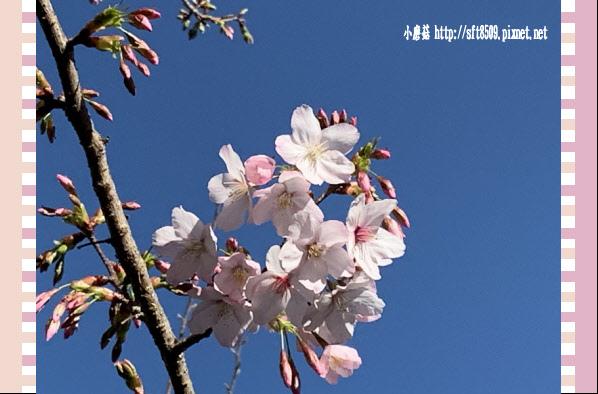 108.3.2.(10)福壽山農場-千櫻園.JPG