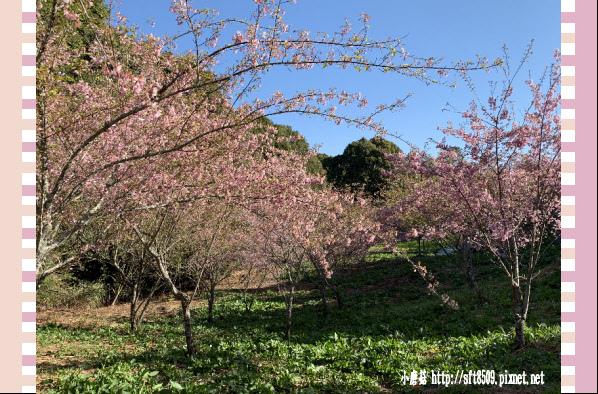 108.3.2.(15)福壽山農場-千櫻園.JPG