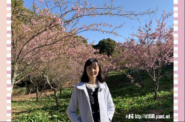 108.3.2.(17)福壽山農場-千櫻園.JPG