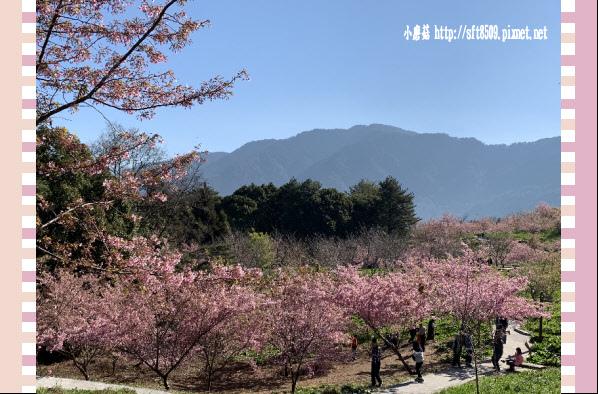 108.3.2.(23)福壽山農場-千櫻園.JPG