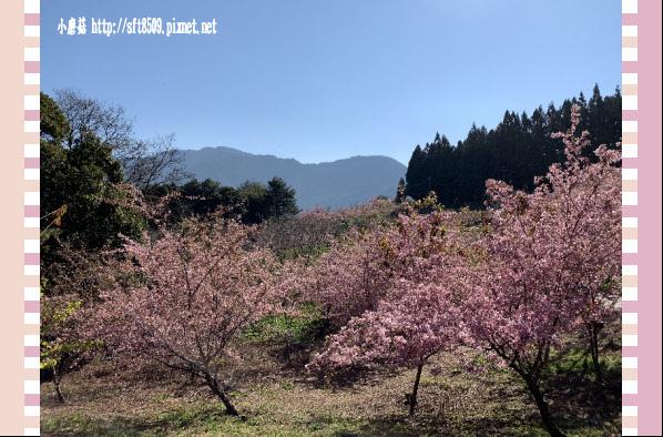 108.3.2.(24)福壽山農場-千櫻園.JPG