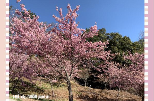 108.3.2.(25)福壽山農場-千櫻園.JPG
