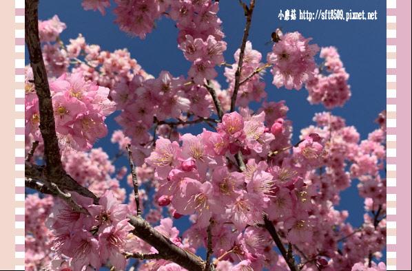 108.3.2.(46)福壽山農場-千櫻園.JPG