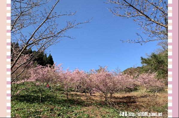 108.3.2.(60)福壽山農場-千櫻園.JPG