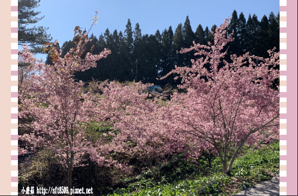 108.3.2.(61)福壽山農場-千櫻園.JPG