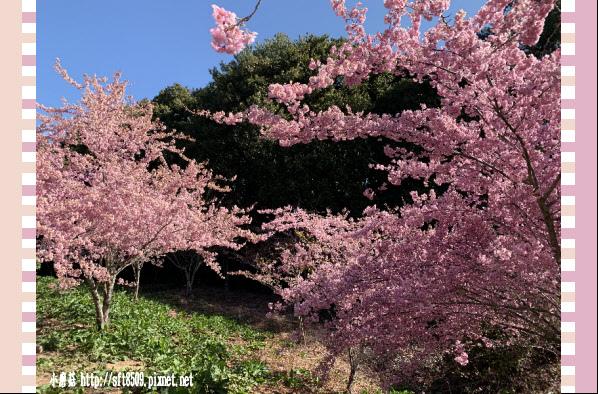 108.3.2.(80)福壽山農場-千櫻園.JPG
