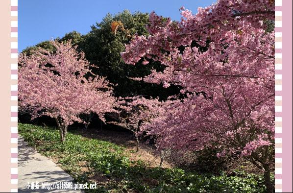 108.3.2.(81)福壽山農場-千櫻園.JPG