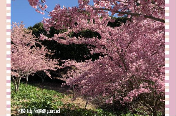 108.3.2.(92)福壽山農場-千櫻園.JPG