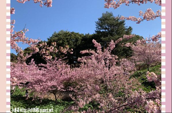 108.3.2.(129)福壽山農場-千櫻園.JPG