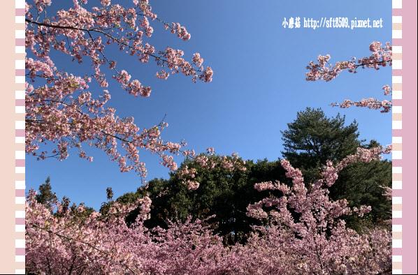 108.3.2.(130)福壽山農場-千櫻園.JPG