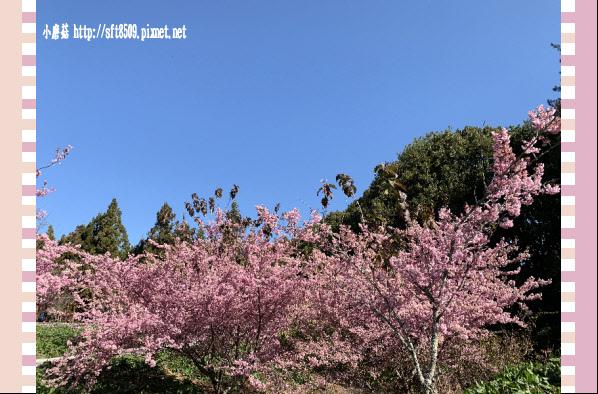 108.3.2.(131)福壽山農場-千櫻園.JPG