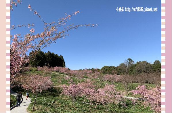 108.3.2.(145)福壽山農場-千櫻園.JPG