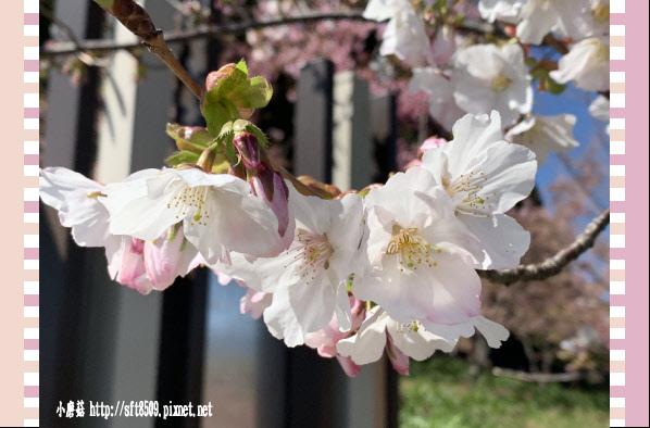 108.3.2.(159)福壽山農場-千櫻園.JPG