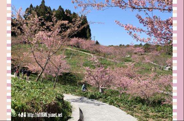 108.3.2.(166)福壽山農場-千櫻園.JPG