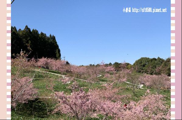 108.3.2.(167)福壽山農場-千櫻園.JPG