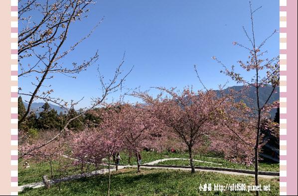 108.3.2.(171)福壽山農場-千櫻園.JPG