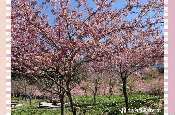 108.3.2.(190)福壽山農場-千櫻園.JPG