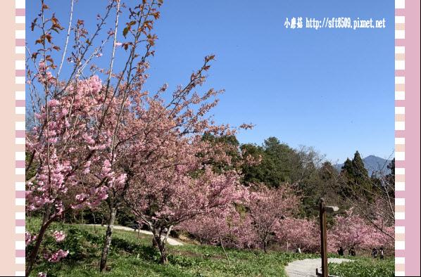 108.3.2.(194)福壽山農場-千櫻園.JPG