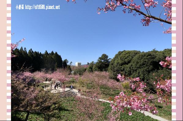 108.3.2.(197)福壽山農場-千櫻園.JPG