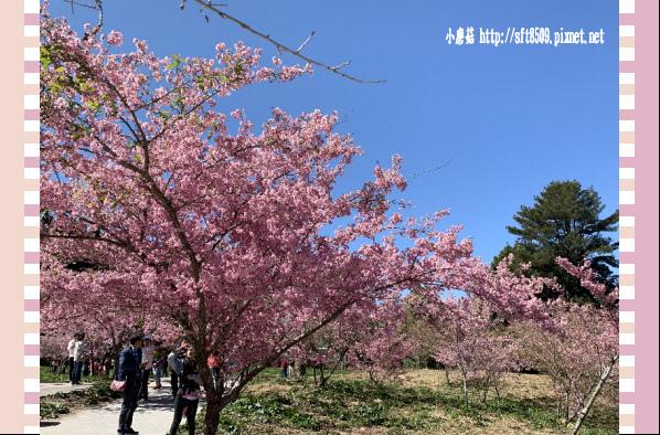 108.3.2.(202)福壽山農場-千櫻園.JPG