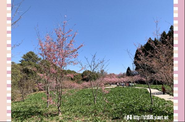 108.3.2.(212)福壽山農場-千櫻園.JPG