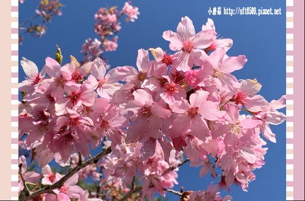 108.3.2.(213)福壽山農場-千櫻園.JPG