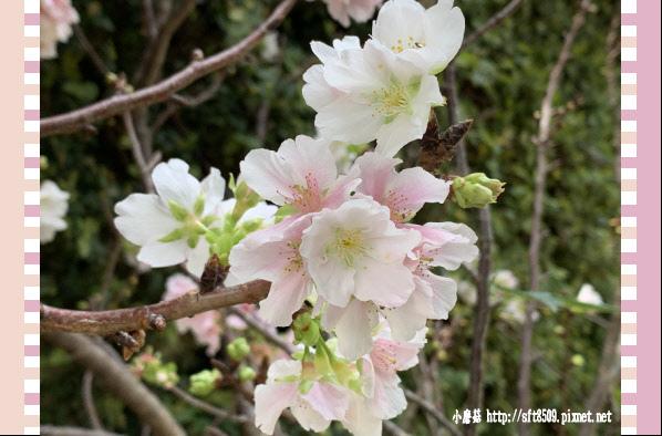 108.3.30.(9)苗栗大湖-石風城堡‧創意料理.JPG
