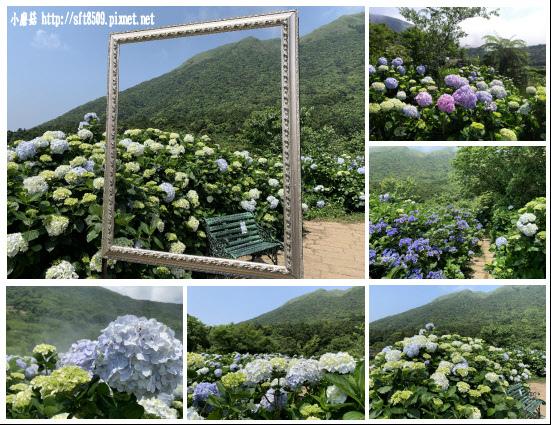 108.5.12.(200)竹子湖-花與樹繡球花田.JPG