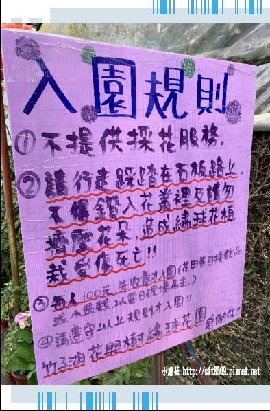 108.5.12.(3)竹子湖-花與樹繡球花田.JPG
