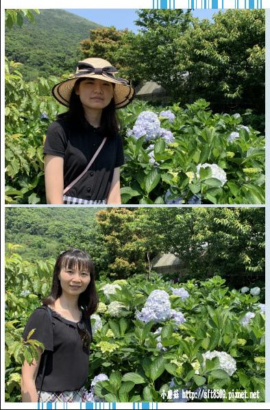 108.5.12.(78)竹子湖-花與樹繡球花田.JPG