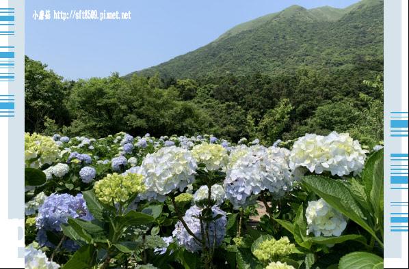 108.5.12.(100)竹子湖-花與樹繡球花田.JPG