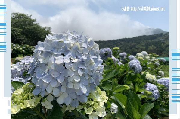 108.5.12.(162)竹子湖-花與樹繡球花田.JPG