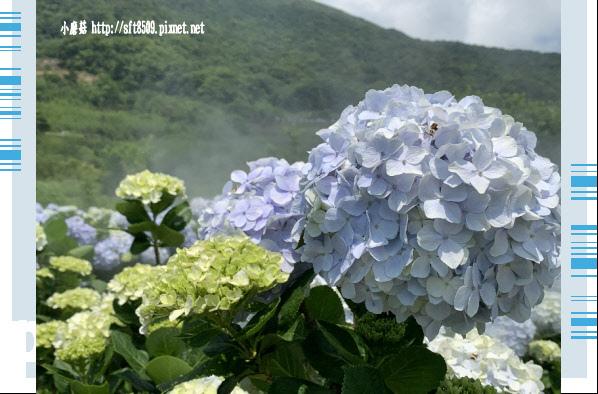 108.5.12.(179)竹子湖-花與樹繡球花田.JPG