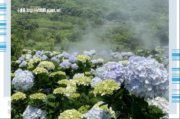 108.5.12.(176)竹子湖-花與樹繡球花田.JPG