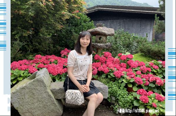 108.5.26.(6)竹子湖-大賞園繡球花田.JPG