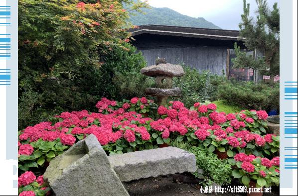 108.5.26.(2)竹子湖-大賞園繡球花田.JPG