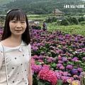 108.5.26.(40)竹子湖-大賞園繡球花田.JPG