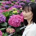 108.5.26.(74)竹子湖-大賞園繡球花田.JPG