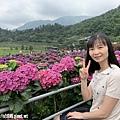 108.5.26.(61)竹子湖-大賞園繡球花田.JPG