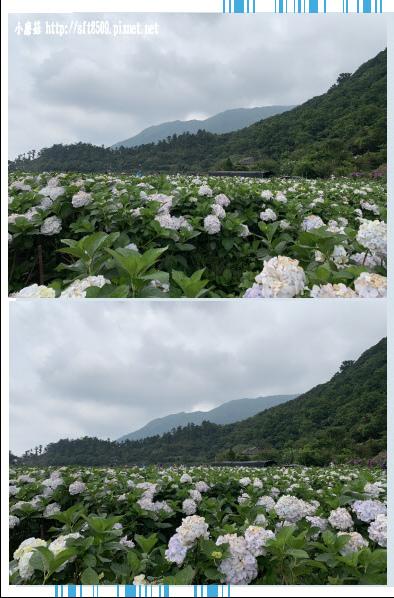 108.5.26.(81)竹子湖-大賞園繡球花田.JPG