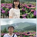 108.5.26.(88)竹子湖-大賞園繡球花田.JPG
