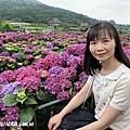 108.5.26.(106)竹子湖-大賞園繡球花田.JPG