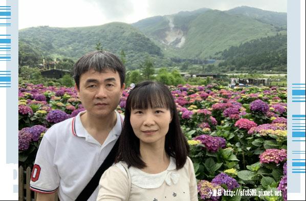 108.5.26.(98)竹子湖-大賞園繡球花田.JPG