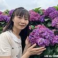 108.5.26.(136)竹子湖-大賞園繡球花田.JPG