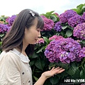 108.5.26.(134)竹子湖-大賞園繡球花田.JPG