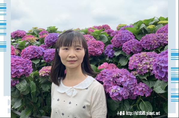 108.5.26.(138)竹子湖-大賞園繡球花田.JPG