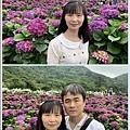 108.5.26.(174)竹子湖-大賞園繡球花田.JPG