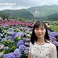 108.5.26.(187)竹子湖-大賞園繡球花田.JPG